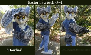 Houdini the Eastern Screech Owl by JakeJynx