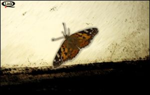 Butterfly by linkq