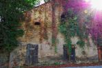 Colours of the fall on a wall by antivir123