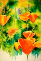 Poppies by terriwilson