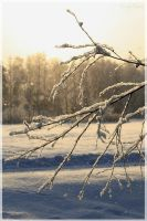 Snowy branches. by Kerly91