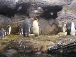 Attack of the pinguins by Utopeless