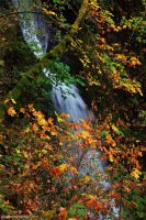 Shepperd's Dell Falls by worldtravel04