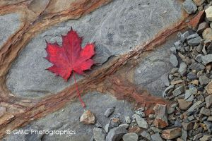 Red Maple leaf of Slovenia by GMCPhotographics