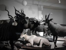 Berlin Museum: Sh! Theyre here! by Roydz