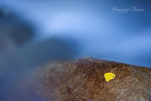 Yellow and Blue... by vincentfavre