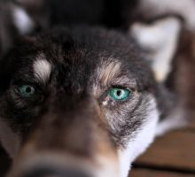 Custom Eyes for Black Coyote Headdress by NaturePunk