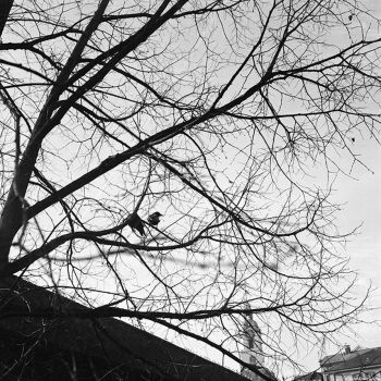 Rollei 15 - Ilford - two birds by Picture-Bandit