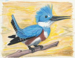 Belted Kingfisher by painted-wolfs-den