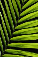 Rainforest Leaf 13755755 by StockProject1