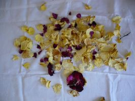 Dried rose petals by Cat-in-the-Stock