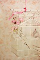 Birdcage by SweetPeaPhototc