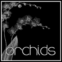 Orchids by butnotquite