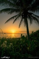 Sunrise-Paradise-at-Oceab-Beach-with-Coconut-Palm- by CaptainKimo