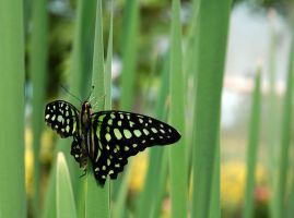 butterfly 2 by LucieG-Stock