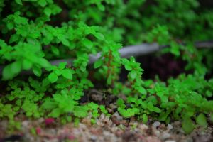 Small Green World by irmans20