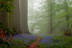 misty path in the forest by rhipster