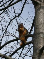 Squirrel I by dull-stock