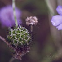 green ball by JuliaGeisler