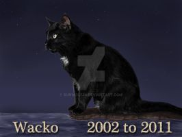 Dear Wacko - Rest In Peace by sunwolf29