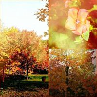 Fall : A New Beginning by LivelovelifeEleni