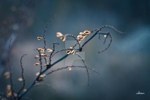 nature still life by mfcam