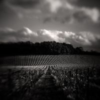 The Vineyard by Jez92