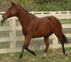 Sunny 7 by stockhorse