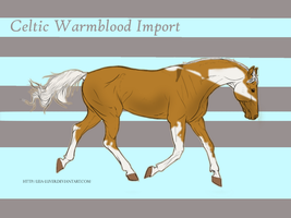 Celtic Warmblood Import #8 by ReeseS8