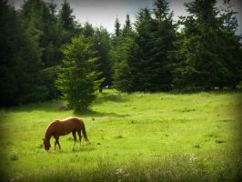 A hores in the field by Ranae490