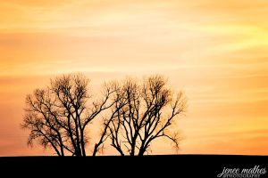 Silhouettes at Sunset by JeneeMathes