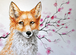 Spring fox by LiaBorderCollie