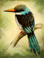 Blue Breasted Kingfisher by charfade