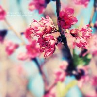 Springtime Melody by nhuthanh