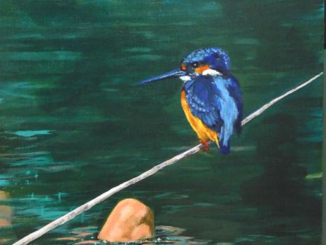 Kingfisher by vinny53