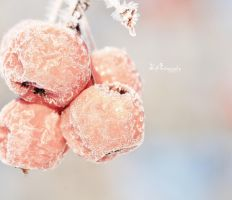 Beautifully Frozen by PhotographsByBri