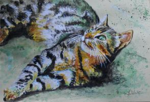 cat by danuta50