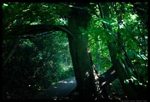 Mirkwood by Sato-photography