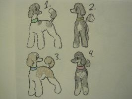 Standard Poodle Adopts! (OPEN) by ZombieGSD