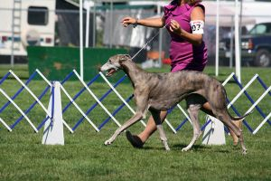 Stride by DogDaysPhotography