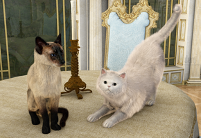 Cats :: Soothing Pets by DrowElfMorwen