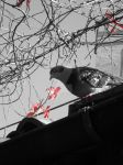 Rome: Just a Bird :) by eskici