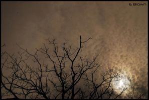 Just branches by EmilioBrown