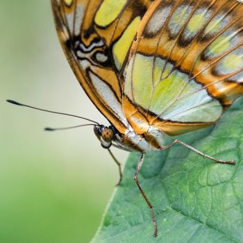 Butterfly Detail by LordGuardian