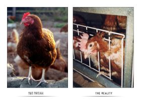 The dream --- The reality by x-vegan-x