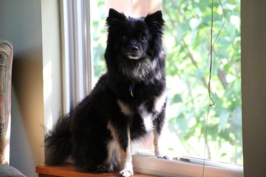 Myles on the Sill by Veszely