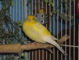 Bird Stock 1 by Orangen-Stock