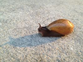 Snail Stock4 by Oliviaissweet