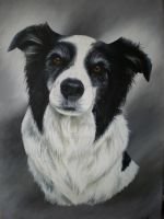 Joe by petportraitman