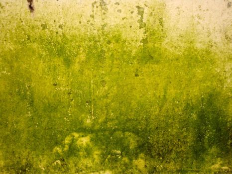 Wall - Texture 13 - by K-RiM-Startimes2